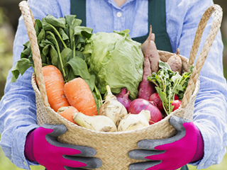 生態系農法