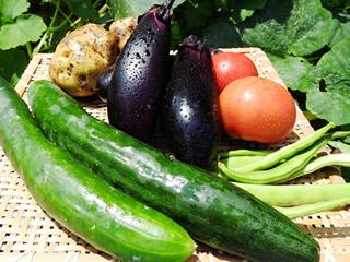 本物の野菜を
