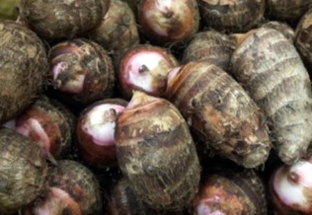 里芋のサムネイル