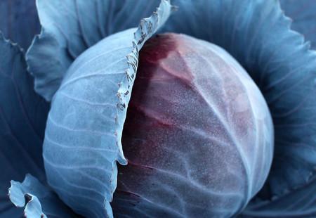 紫キャベツのサムネイル