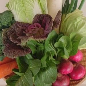 【定期便】「極野菜」旬のお野菜セット 11~12品 【フアミリー向け】
