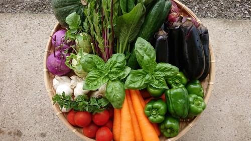 「極野菜」旬のお野菜セット 7~8品 【お一人様向け】