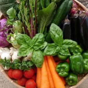 「極野菜」旬のお野菜セット 11~12品 【フアミリー向け】