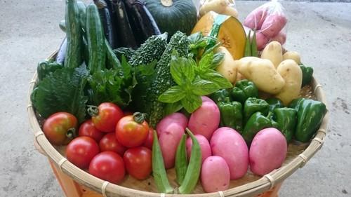【定期便】「極野菜」旬のお野菜セット 15~16品 【夏秋の野菜】